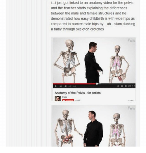 Ii Just Got Linked To An Anatomy Video For The Pelvis And The