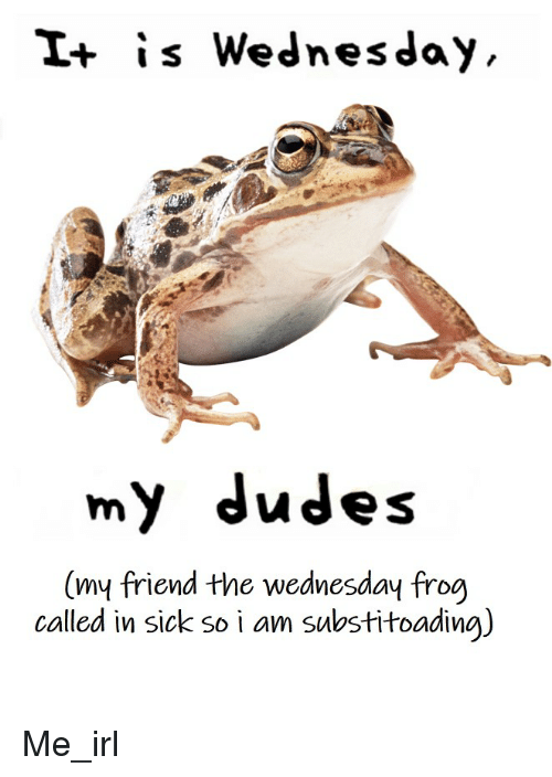 Wednesday, Sick, and Irl: I+ is Wednesday  my dudes  (my friend the wednesday frog  called in sick so i am sulbstitoadina)