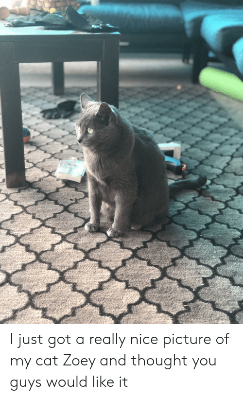 Thought, Nice, and Got: I just got a really nice picture of my cat Zoey and thought you guys would like it