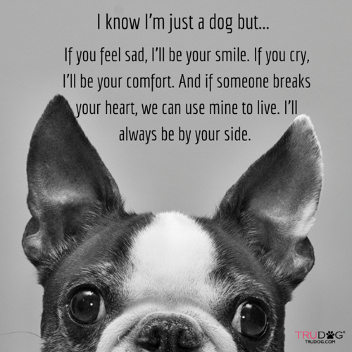 Memes, Heart, and Live: I know I'm just a dog but..  If you feel sad, I'll be your smile. If you cry,  I'll be your comfort. And if someone breaks  your heart, we can use mine to live. I'l  always be by your side  TRUD G*  TRUDOG.COM