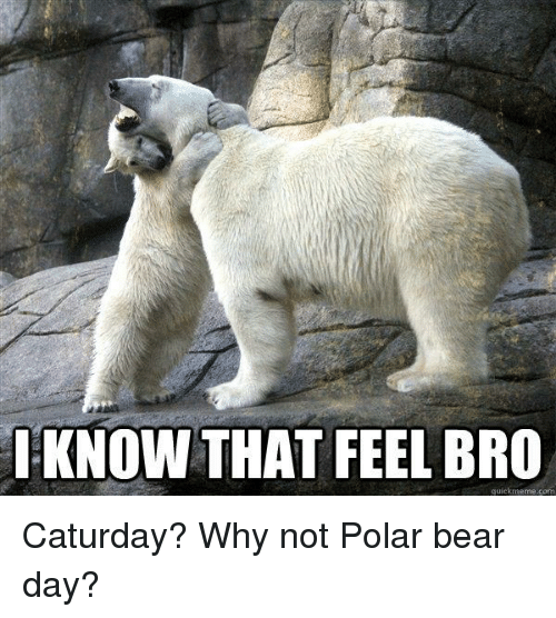 i know that feel bro quick meme com caturday why 1951041 ✅ 25 best memes about the polar express the polar express memes