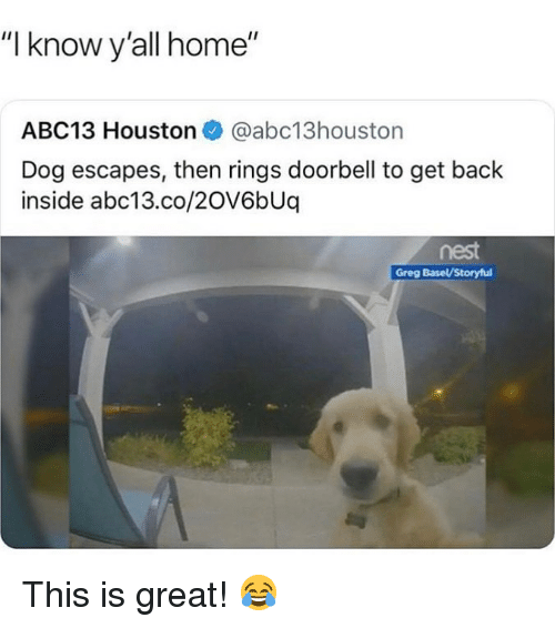 "Memes, Abc13, and Home: ""I know y'all home""  ABC13 Houston @abc13houston  Dog escapes, then rings doorbell to get back  inside abc13.co/20V6bUq  nest  Greg Basel/Storyful This is great! 😂"
