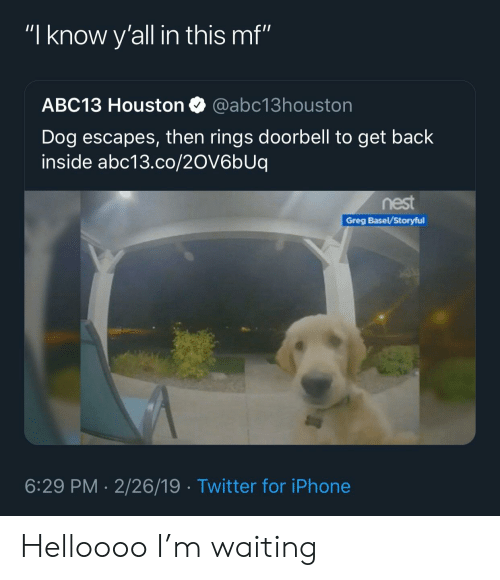 f26adf03 I Know Y'all in This Mf ABC13 Houston Dog Escapes Then Rings ...