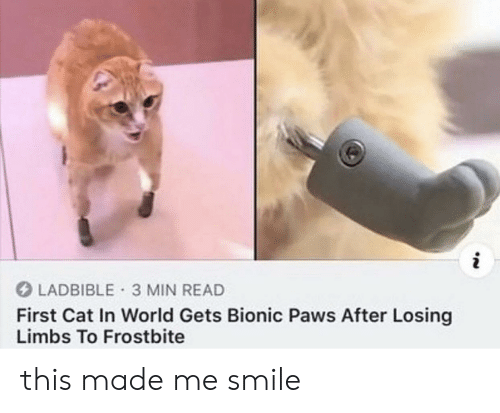 Smile, World, and In World: i  LADBIBLE 3 MIN READ  First Cat In World Gets Bionic Paws After Losing  Limbs To Frostbite this made me smile