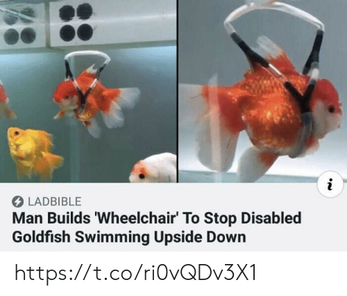 Goldfish, Memes, and Swimming: i  LADBIBLE  Man Builds 'Wheelchair' To Stop Disabled  Goldfish Swimming Upside Down https://t.co/ri0vQDv3X1