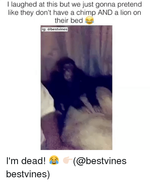 Memes, Lion, and 🤖: I laughed at this but we just gonna pretend  like they don't have a chimp AND a lion on  their bed  ig: @bestvines I'm dead! 😂 👉🏻(@bestvines bestvines)