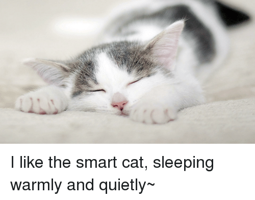 Sleeping, Cat, and Smart