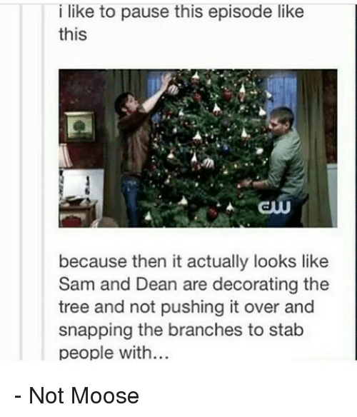 Memes, Tree, and Decoration: i like to pause this episode like  this  because then it actually looks like  Sam and Dean are decorating the  tree and not pushing it over and  snapping the branches to stab  people with... - Not Moose