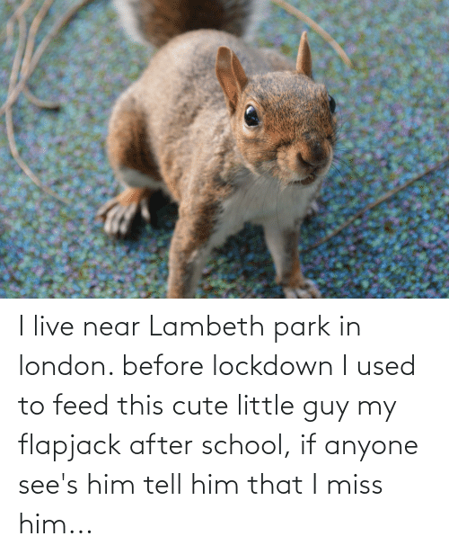 I live near Lambeth park in london. before lockdown I used to feed this cute little guy my flapjack after school, if anyone see's him tell him that I miss him...