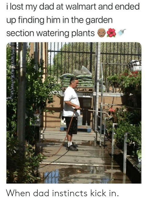 Dad, Walmart, and Lost: i lost my dad at walmart and ended  up finding him in the garden  section watering plants When dad instincts kick in.