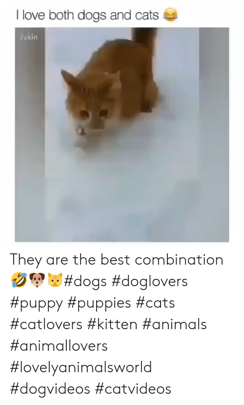 Animals, Cats, and Dogs: I love both dogs and cats  Jukin They are the best combination🤣🐶🐱#dogs #doglovers #puppy #puppies #cats #catlovers #kitten #animals #animallovers #lovelyanimalsworld #dogvideos #catvideos