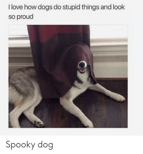 I Love How Dogs Do Stupid Things and Look So Proud Spooky