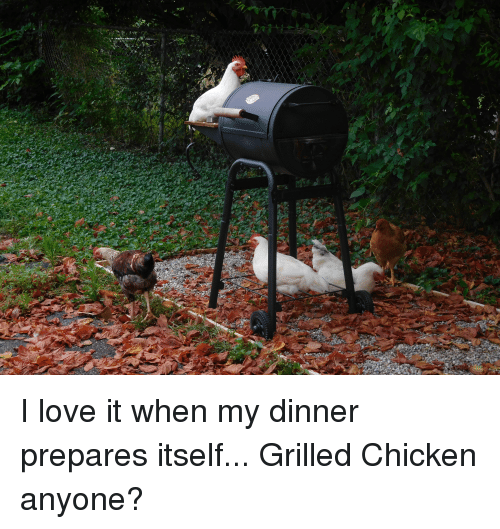 Image result for bbq chicken funny