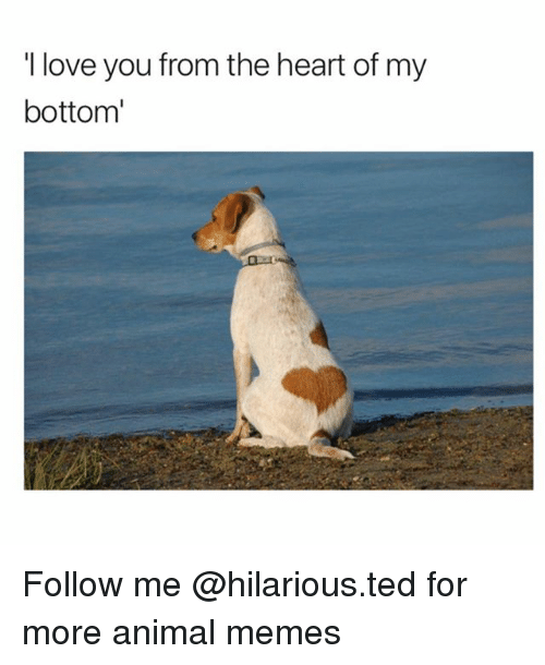 i love you from the heart of my bottom follow me for more animal
