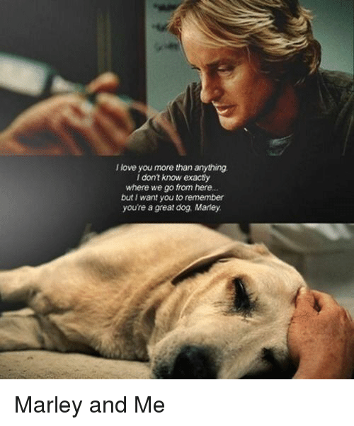 Memes, 🤖, and Marley and Me: I love you more than anything.  I don't know exactly  where we go from here.  but want you to remember  youre a great dog Marley. Marley and Me