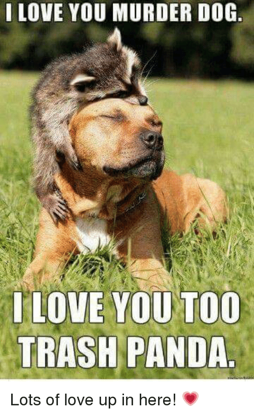 I Love You Murder Dog Love You Too Trash Panda Lots Of Love Up In