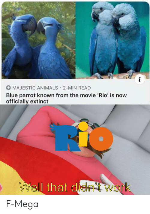 Animals, Work, and Blue: i  MAJESTIC ANIMALS 2-MIN READ  Blue parrot known from the movie 'Rio' is now  officially extinct  .  WWell that de  Work F-Mega