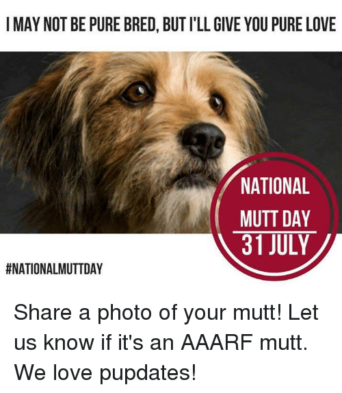 Home Market Barrel Room Trophy Room ◀ Share Related ▶ Love memes 🤖 photo may day you july pure share ill know next collect meme → Embed it next → I MAY NOT BE PURE BRED BUT I'LL GIVE YOU PURE LOVE NATIONAL MUTT DAY 31 JULY Share a photo of your mutt! Let us know if it's an AAARF mutt We love pupdates! Meme Love memes 🤖 photo may day you july pure share ill know mutt pure love pured But Not Give Your Its Bred National Let Love Love memes memes 🤖 🤖 photo photo may may day day you you july july pure pure share share ill ill know know mutt mutt pure love pure love None None But But Not Not Give Give Your Your Its Its Bred Bred National National Let Let found @ 10 likes ON 2017-08-01 19:35:13 BY me.me source: facebook view more on me.me