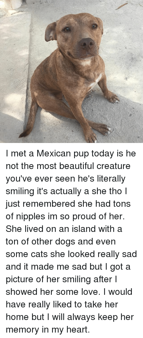 Beautiful, Cats, and Dogs: I met a Mexican pup today is he not the most beautiful creature you've ever seen he's literally smiling it's actually a she tho I just remembered she had tons of nipples im so proud of her. She lived on an island with a ton of other dogs and even some cats she looked really sad and it made me sad but I got a picture of her smiling after I showed her some love. I would have really liked to take her home but I will always keep her memory in my heart.