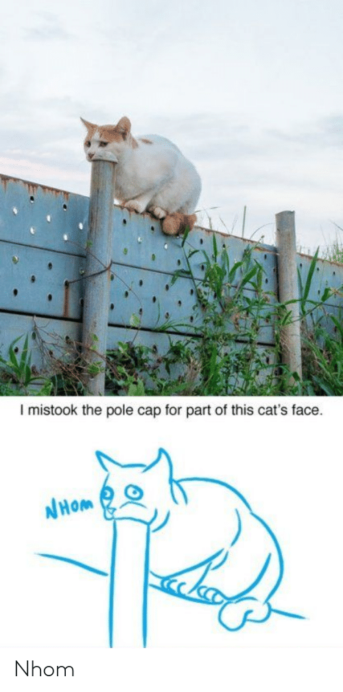 Cats, Cap, and Face: I mistook the pole cap for part of this cat's face.  リ Nhom