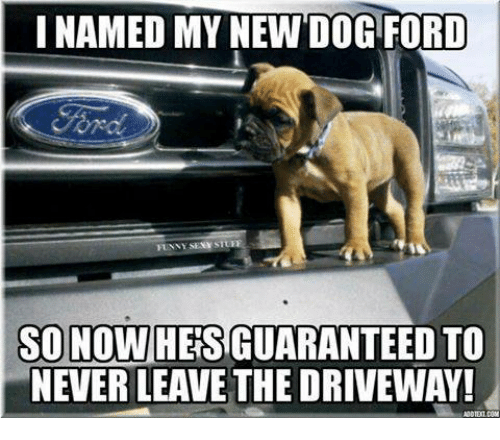 i-named-my-new-dog-ford-funny-st-so-nowh