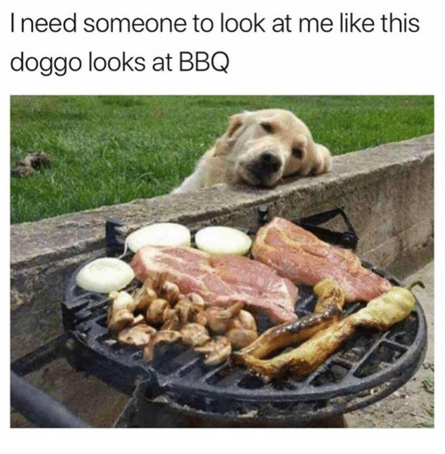 Dank, 🤖, and Doggo: I need someone to look at me like this  doggo looks at BBQ