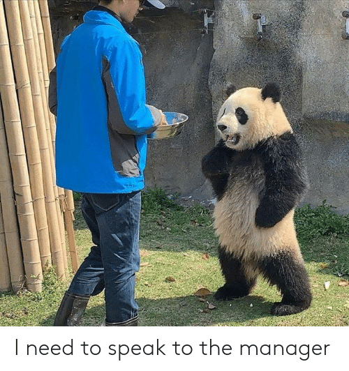 Dank, 🤖, and Speak: I need to speak to the manager