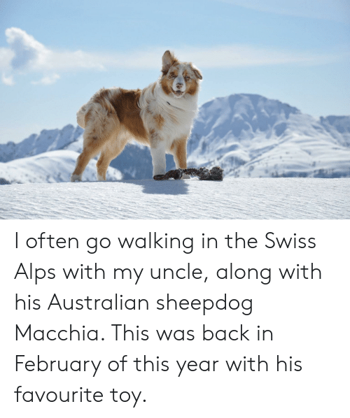 Swiss, Australian, and Back: I often go walking in the Swiss Alps with my uncle, along with his Australian sheepdog Macchia. This was back in February of this year with his favourite toy.