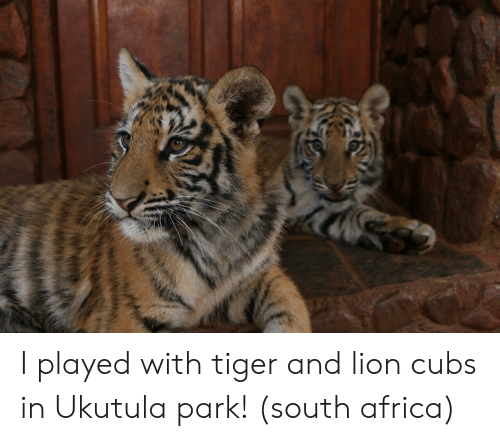 Africa, Cubs, and Lion: I played with tiger and lion cubs in Ukutula park! (south africa)