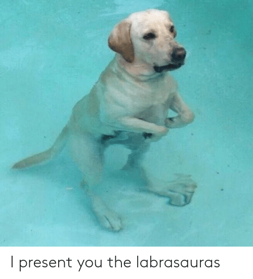 You, Present, and The: I present you the labrasauras