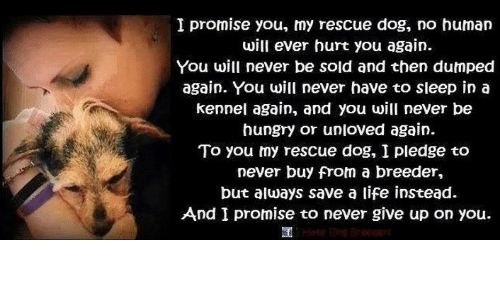 I Promise You My Rescue Dog No Human Will Ever Hurt You Again You