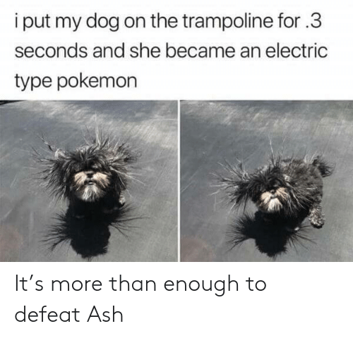 Ash, Pokemon, and Trampoline: i put my dog on the trampoline for.3  seconds and she became an electric  type pokemon It's more than enough to defeat Ash