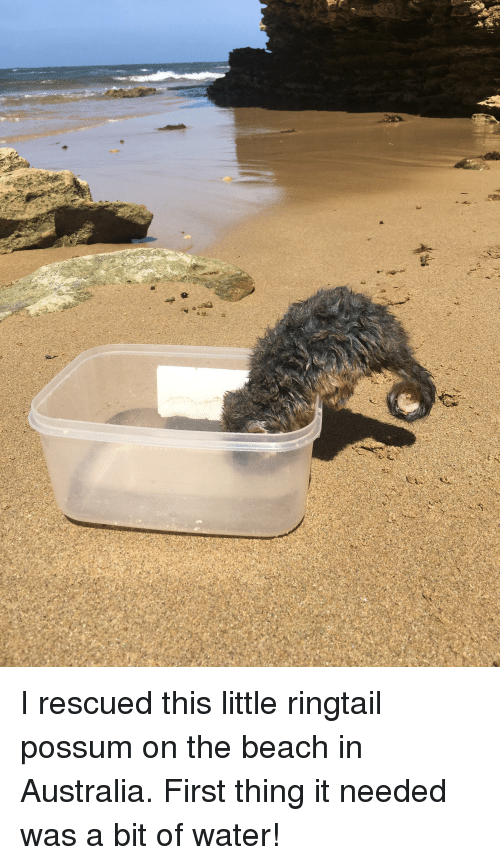 Australia, Beach, and Possum