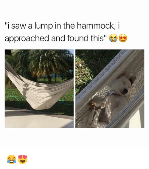"""Memes, Saw, and Hammock: """"i saw a lump in the hammock,i  approached and found this"""" 😂😍"""