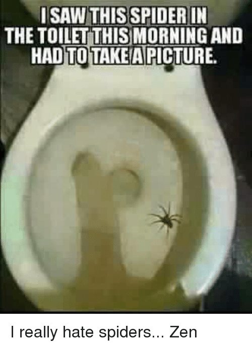 i saw this spider in the toilet thismorning and hadtotakemapicture 4482805 ✅ 25 best memes about spider in the toilet spider in the,Zen Memes