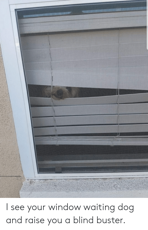 I See Your Window Waiting Dog and Raise You a Blind Buster