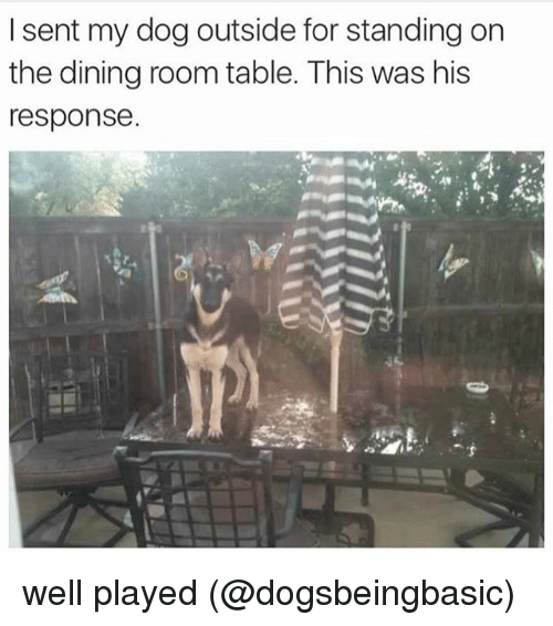 Memes, 🤖, and Dog: I sent my dog outside for standing on  the dining room table. This was his  response. well played (@dogsbeingbasic)