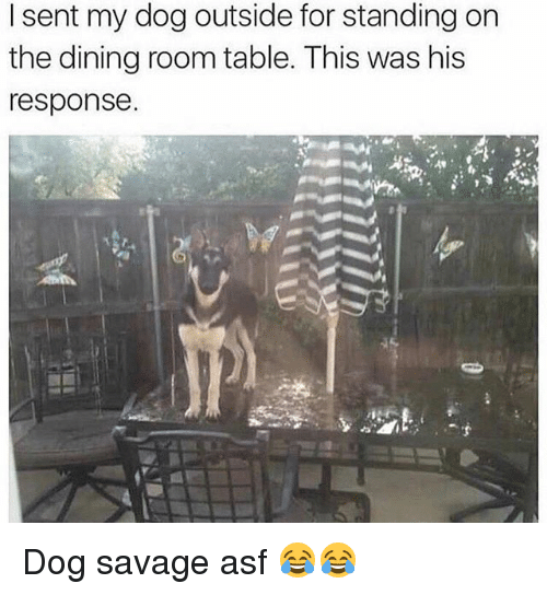 Funny, Savage, and Dog: I sent my dog outside for standing on  the dining room table. This was his  response. Dog savage asf 😂😂