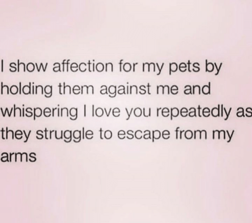 Love, Relationships, and Struggle: I show affection for my pets by  holding them against me and  whispering I love you repeatedly as  they struggle to escape from my  arms