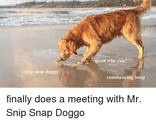I Snip Snap Doggo Boop Woah Who You Commencing Boop Finally Does A