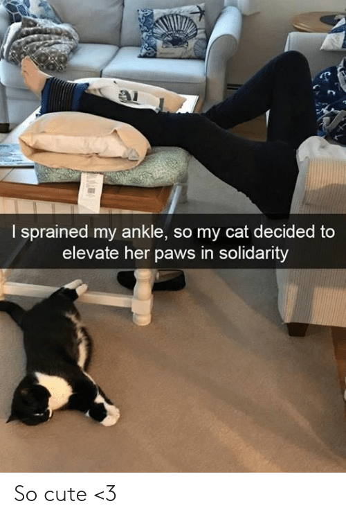 Cute, Memes, and 🤖: I sprained my ankle, so my cat decided to  elevate her paws in solidarity So cute <3