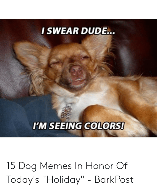 46a351b1 I SWEAR DUDE I'M SEEING COLORS! 15 Dog Memes in Honor of Today's ...