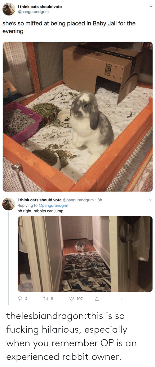 Cats, Jail, and Target: i think cats should vote  @pangurandgrim  she's so miffed at being placed in Baby Jail for the  evening   i think cats should vote @pangurandgrim· 8h  Replying to @pangurandgrim  jump  oh right, rabbits can  li  27 6  197  4 thelesbiandragon:this is so fucking hilarious, especially when you remember OP is an experienced rabbit owner.