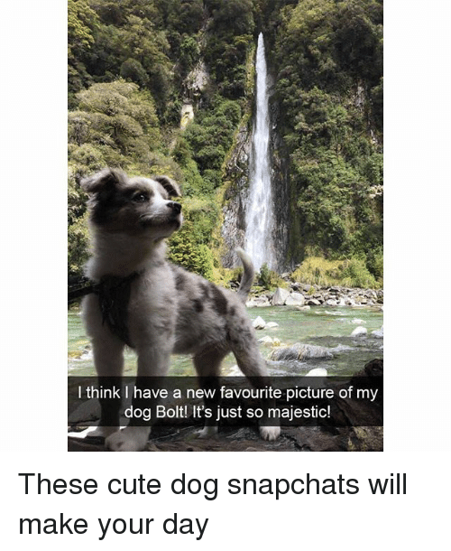 Cute, Funny, and Dog: I think I have a new favourite picture of my  dog Boltl It's just so majestic! These cute dog snapchats will make your day