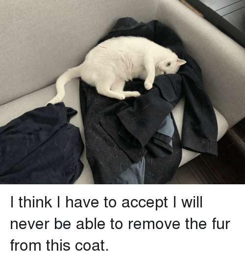 Never, Fur, and Will