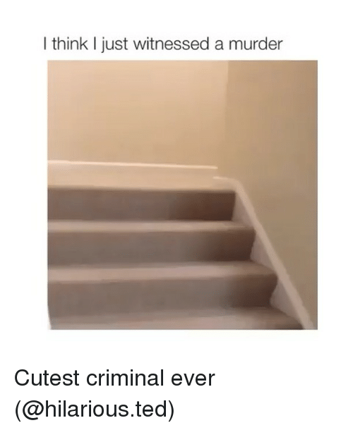 Funny, Ted, and Hilarious: I think I just witnessed a murder Cutest criminal ever (@hilarious.ted)