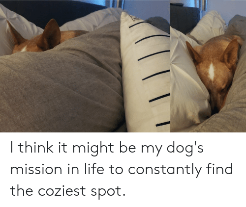 Dogs, Life, and Think: I think it might be my dog's mission in life to constantly find the coziest spot.