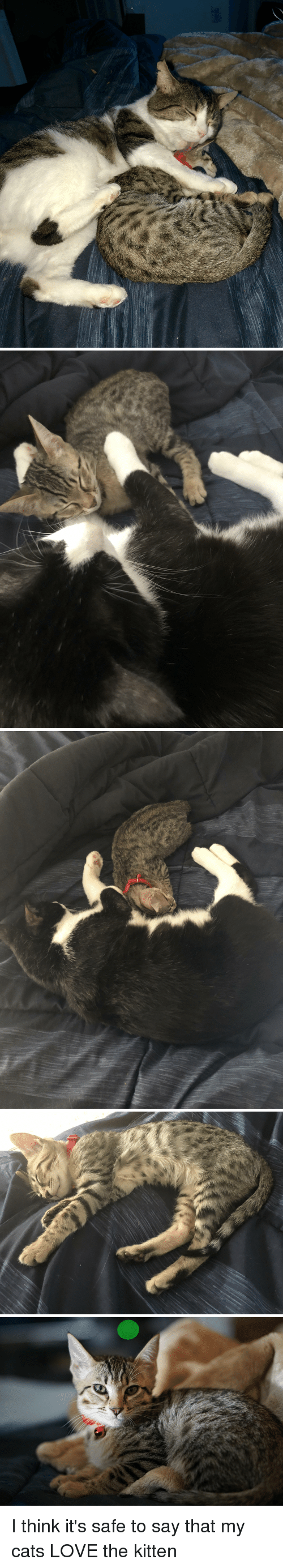 Cats, Love, and Red: I think it's safe to say that my cats LOVE the kitten