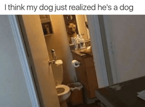 Dog, Think, and Just: I think my dog just realized he's a dog