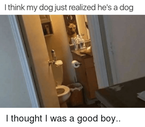 Good, Thought, and Boy: I think my dog just realized he's a dog I thought I was a good boy..